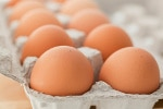 cartone uova