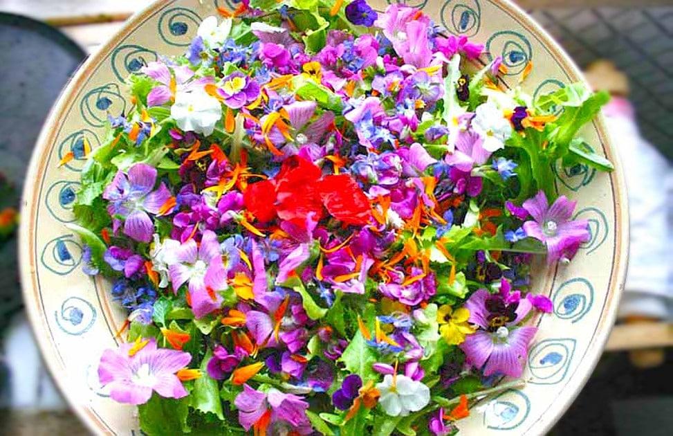 Tanti fiori commestibili trovano spazio sulle tavole dei for Fiori edibili